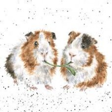 Wrendale Design by Hannah Dale Notecards Cavia